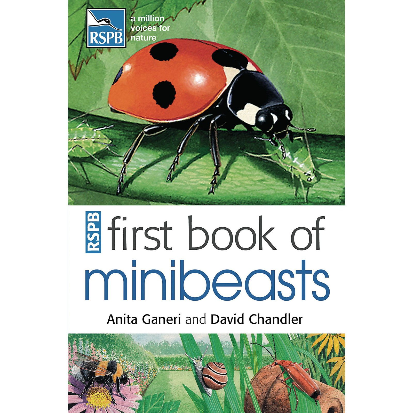 First Book Of Minibeasts Hope Education
