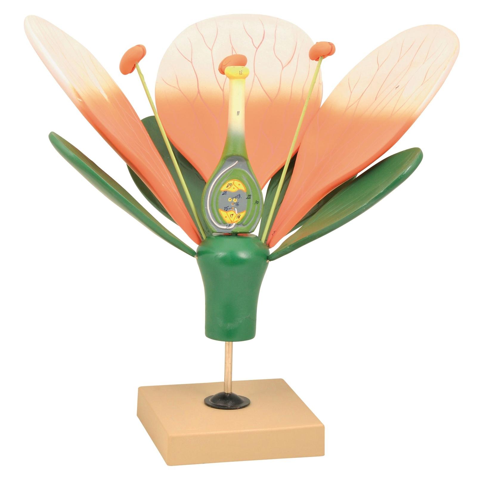 Giant Flower Model