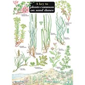 Key To Plants Common To Sand Dunes - Name Trail Pack of 10