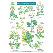 Key To Woodland Plants Name Trail Pack of 10