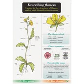 Describing Flower Chart Name Trail Pack of 10