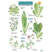 Playing Field Plants Name Trail Pack of 10