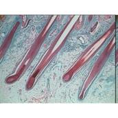 Prepared Microscope Slide Set - Human Anatomy: Set 1
