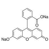 Fluorescein - 50g