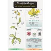 Guide to Describing Flowers