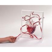 3D Pumping Heart