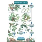 Name Trail - Trees