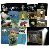 What's Inside Animals - Flash Cards