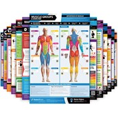Exercise and Conditioning Posters - Full Set