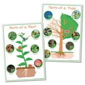 Parts of Plant and Tree - Posters