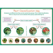 Classifying Plants - Poster