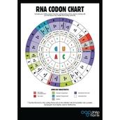 RNA Codon Poster