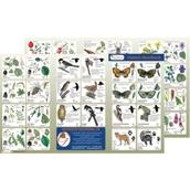 Wildlife Habitat Guide: Woodlands