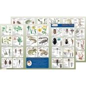 Wildlife Habitat Guide: Ponds