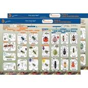 Identification Guide: Land Invertebrates
