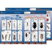 Identification Guide: Freshwater Invertebrates