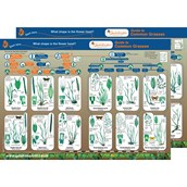 Identification Guide: British Grasses