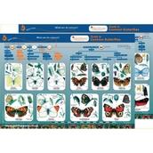 Identification Guide: Common Butterflies