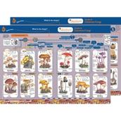 Identification Guide: Common Fungi