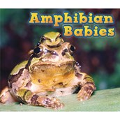 Animal Babies, Pack of 6 Paper Back Books