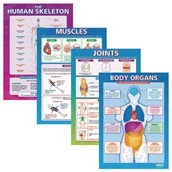 Laminated Body Parts Posters
