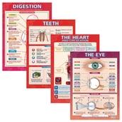 Body Organ Posters