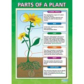 Pack of 2 Plants Posters