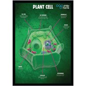 Pack of 3 Posters, Cell Structures
