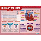 Heart and Blood Poster