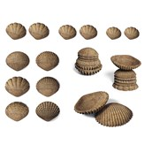 Tactile Shells - Pack of 36