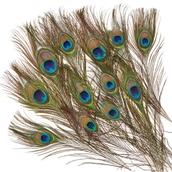Classmates Peacock Feathers