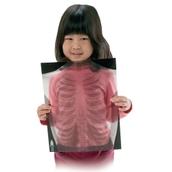 Human Skeleton True To Life