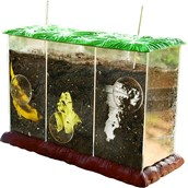 Clear Compost Container