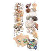 Small Shells Pack of 144