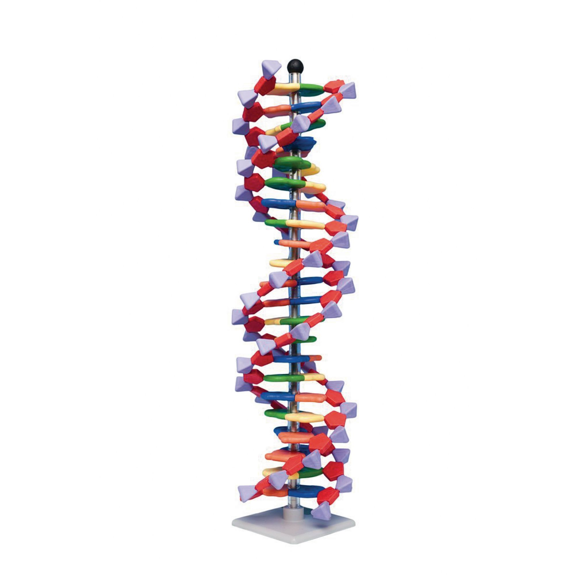 Mini DNA 22 Layer Molecular Model Kit
