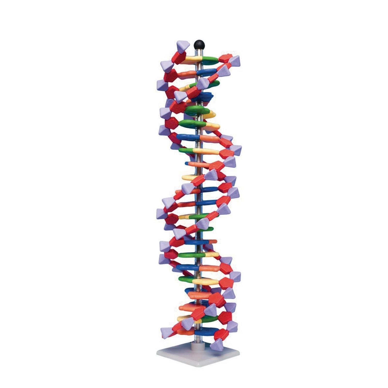 Mini DNA 22 Layer Molecular Model Kit