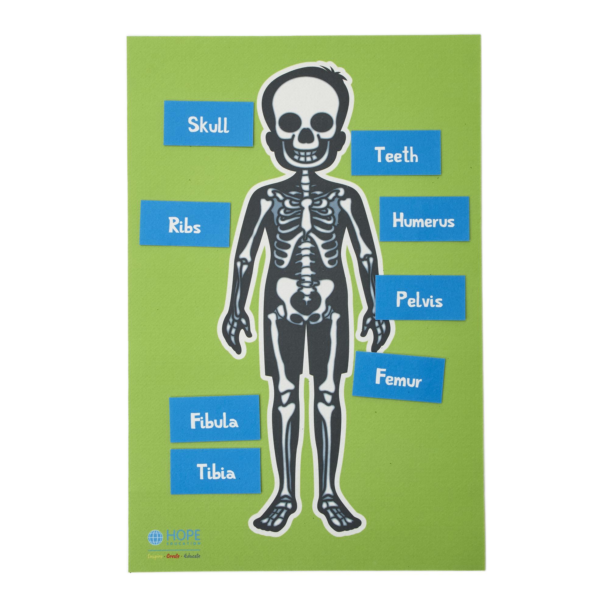 Image result for skeleton