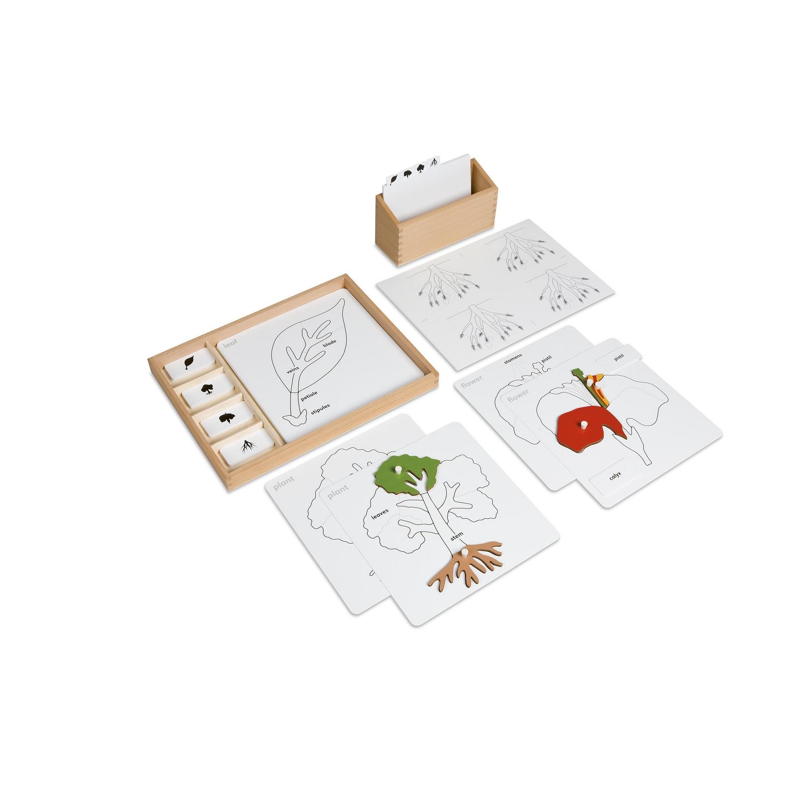 Botany Puzzle Activity Set
