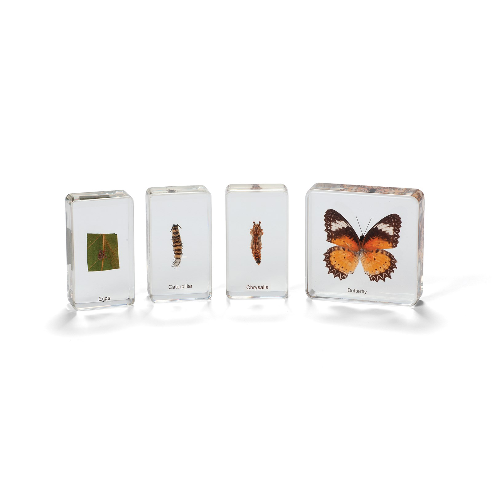 Mini Beasts Butterfly Life Cycle