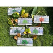 Outdoor Which Tree Which Leaves Signs from Hope Education