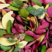 Dried Coloured Leaves