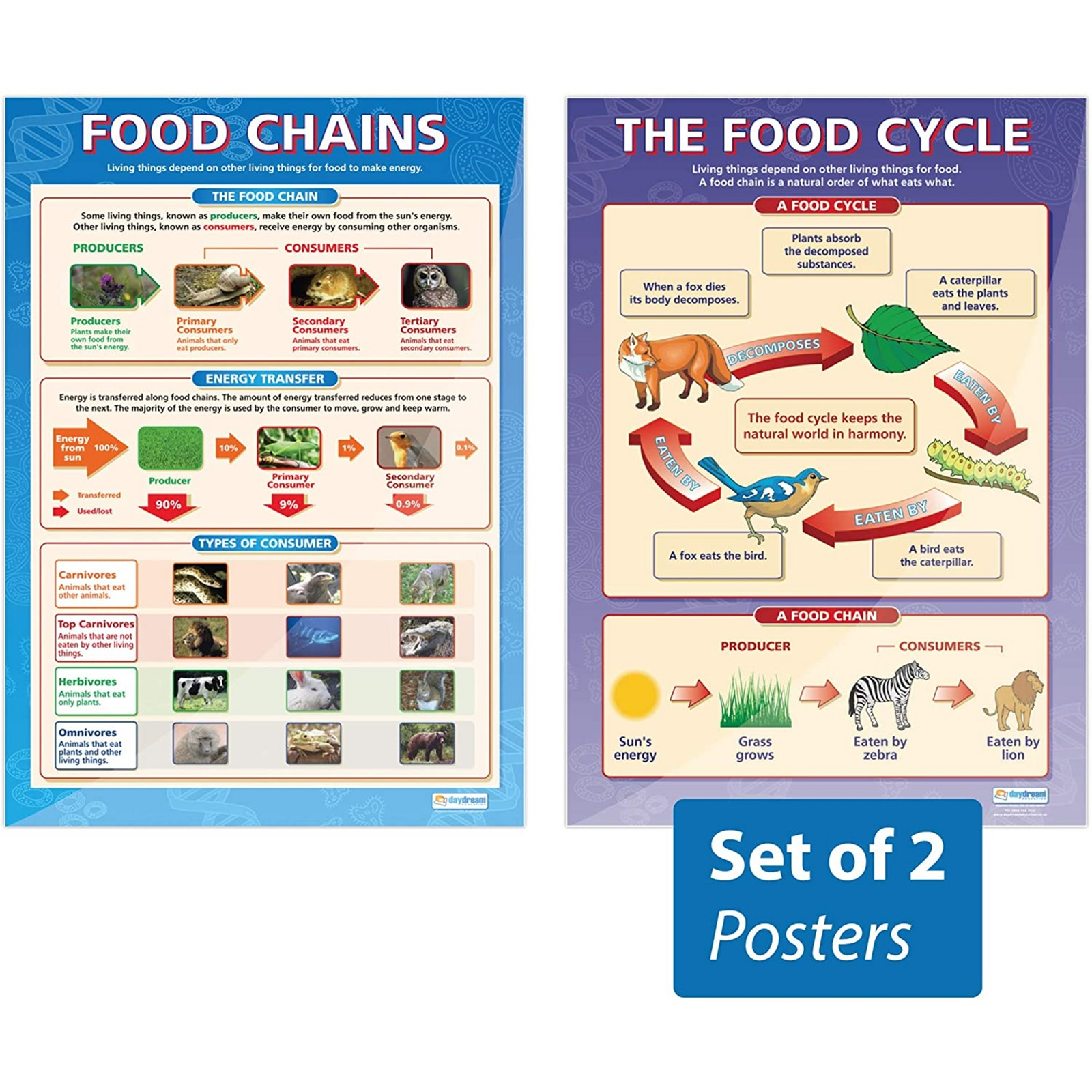 The Food Cycle Food Chains Posters