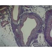 Basic Circulatory Slide Set